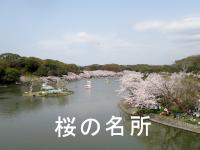 明石 桜の名所