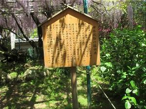 住吉神社 藤(ふじ)の花 5