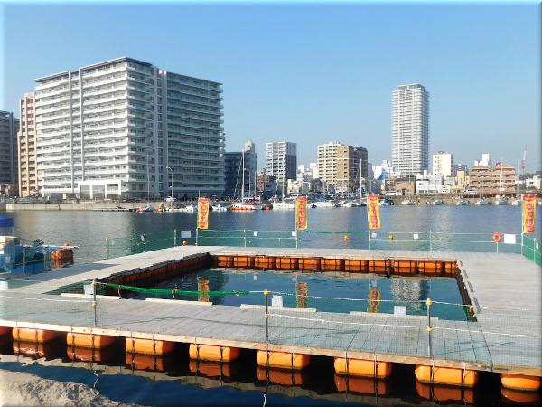 明石港の風景 3 明石海上釣り堀@Sea