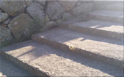 明石公園 アライグマ 11