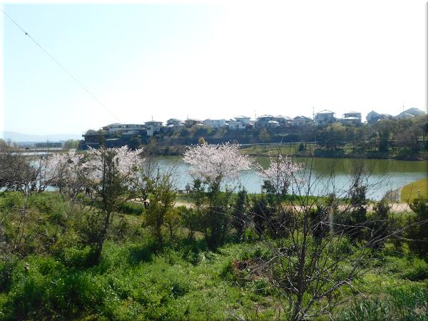 明石 ため池のある風景 3