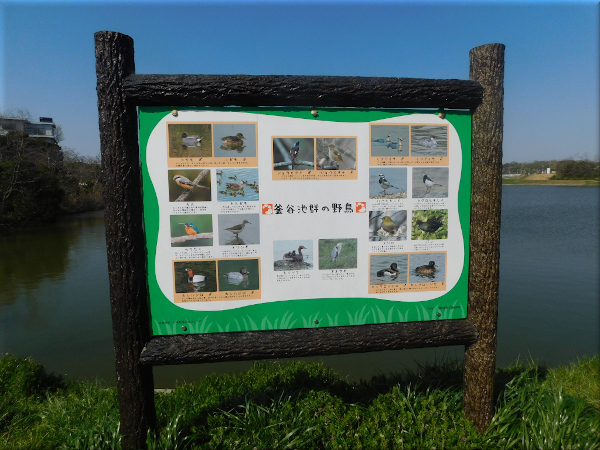 明石 ため池のある風景 7