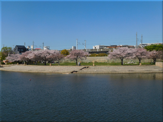 中尾親水公園 桜2