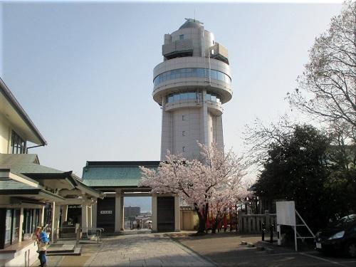 柿本神社の桜