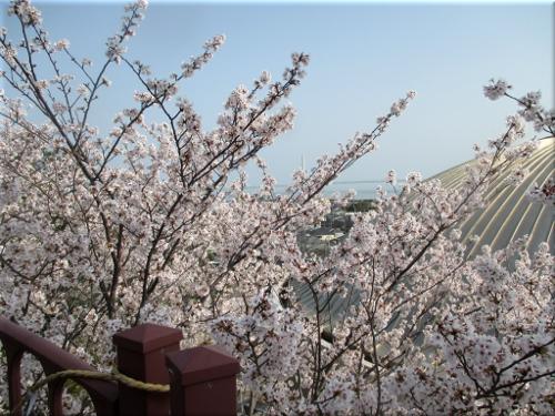 柿本神社の山門前から見た「桜越しの明石海峡大橋」