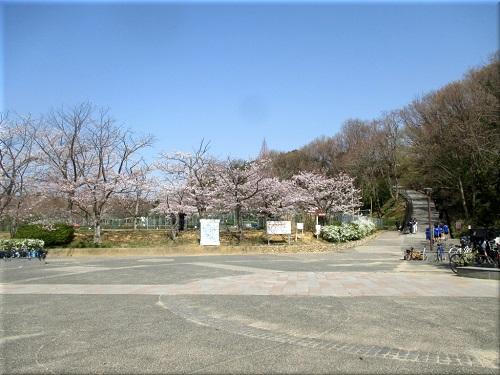 金ケ崎公園の桜 2