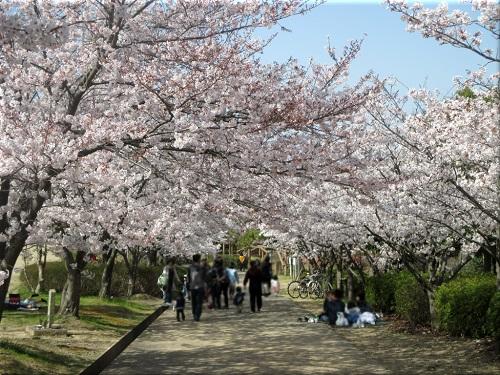 金ケ崎公園の桜 6
