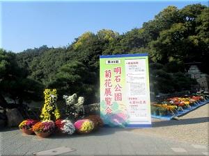 明石公園菊花展覧会 1