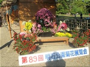 明石公園菊花展覧会 6