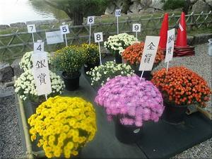 明石公園菊花展覧会 3