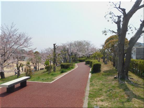 錦が丘中央公園 1