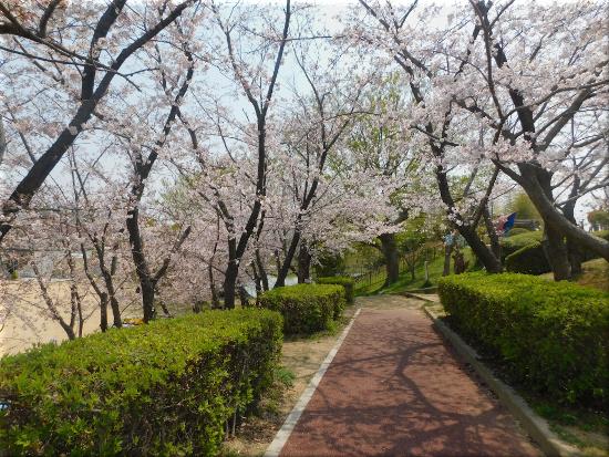 錦が丘中央公園 2
