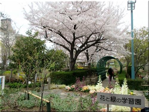 花と緑の学習園 3