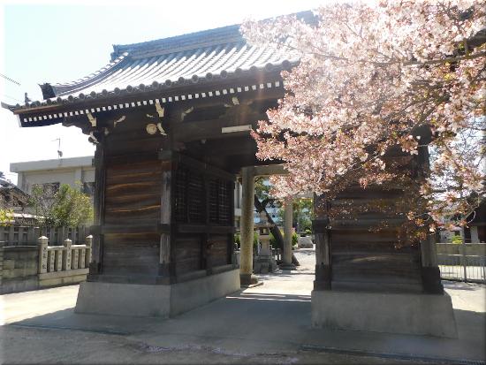 御厨神社 桜3