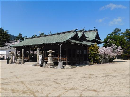 御厨神社 桜5