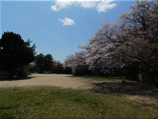 御厨神社 桜8