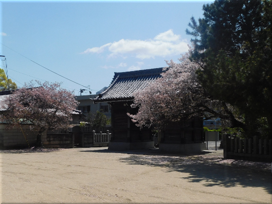 御厨神社 桜2