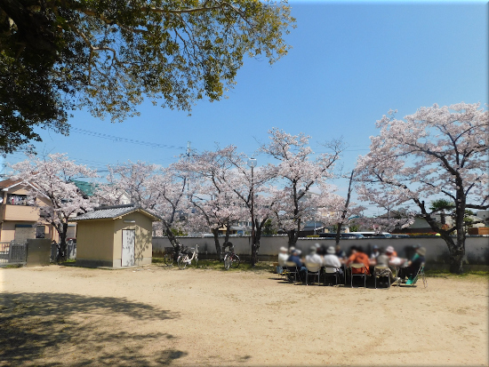 大窪八幡宮 桜の花3