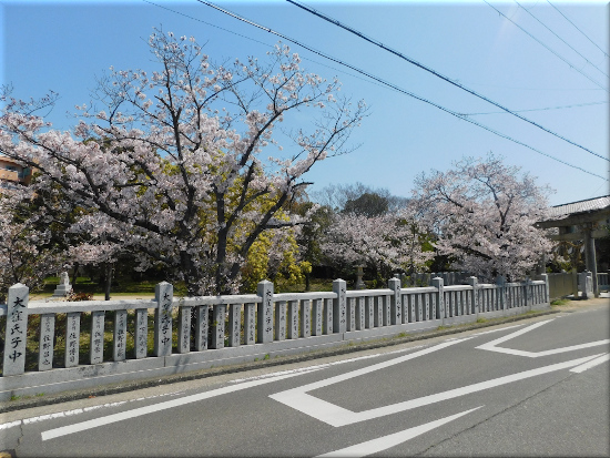 大窪八幡宮 桜の花2