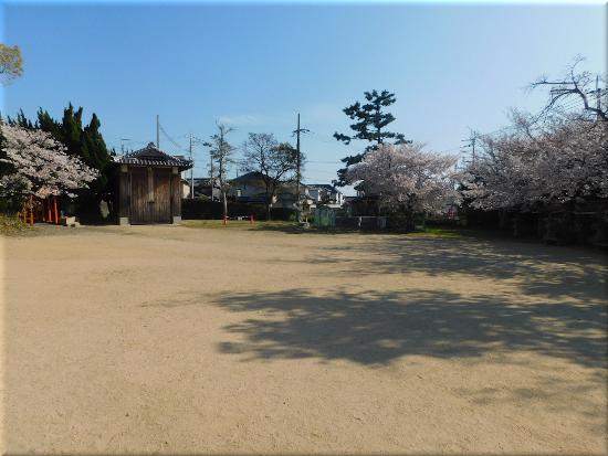住吉神社(大久保町) 桜1