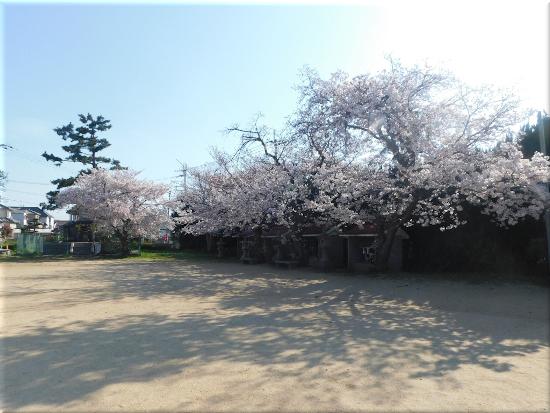 住吉神社(大久保町) 桜2