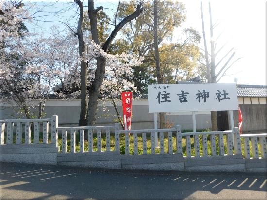 住吉神社(大久保町) 桜4