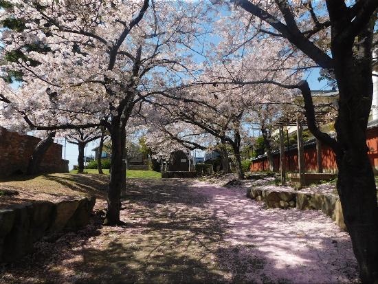 二見横河公園 桜1