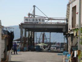 明石港 5