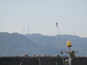 淡路島北部の風力発電
