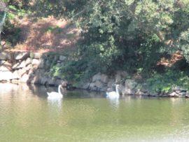 明石公園 2
