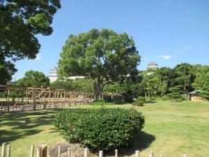 明石公園 巨木 1