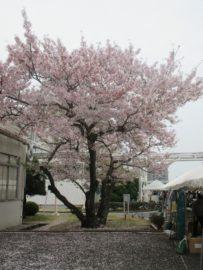 富士通まつり 7