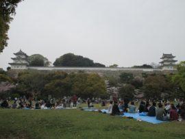 明石公園 さくら祭り 1