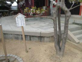 三本の幹が輪になった木