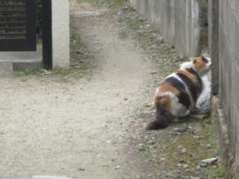 大蔵谷で見かけた猫