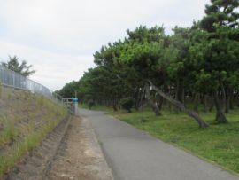浜の散歩道 6