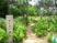 住吉神社 「第6回 あじさいまつり」を見てきたよ。